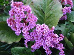25 talajtakaró növény, melyekkel gyönyörűvé teheted a kertet! Beth Chatto, Plantation, Flower Designs, Gardening Tips, Make It Yourself, How To Make, Beautiful, Vence, Emo