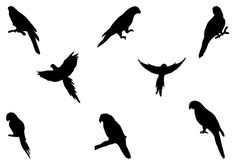 Beautiful parrots are added to this Parrot Silhouette Vector which is ideal to do bird vector illustration and graphics. Get the EPS, PNG and JPEG files of this parrot vector silhouette.