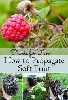 Propagating fruit for free