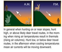 To Beat a Buck's Nose, Remember Thermals | Quality Deer Management Association