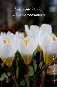 voimakortti Voisimme kaikki yhdistää voimamme Affirmation Cards, Affirmations, Rose, Flowers, Plants, Accounting, Relationships, Pink, Plant