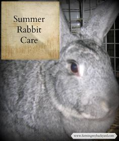 Summer rabbit care is important as hot weather can be deadly to rabbits. Here are some tips on keeping your bunnies cool when it's warm outside.