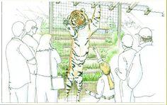 San Diego Zoo Safari Park Tiger Trail (Version 2) San Diego Zoo, Safari, Trail, Concept, Park, Sketch, Design, Sketch Drawing, Sketches