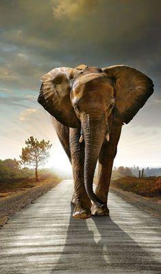 Znalezione obrazy dla zapytania słoń