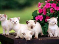 kočky_tapeta_101