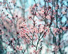 Mi bastava un tuo sguardo per fiorire.
