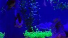 Goldfish enjoy Star Wars too! Boheme fit - YouTube