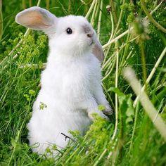 What a pretty bunny!
