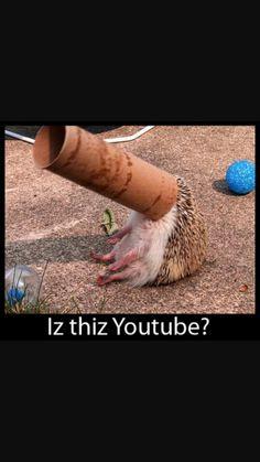 Hedgie<3<3 Iz this youtube?