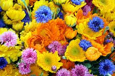 Brighten Your Day at the Farmers' Market - Photo by Rosemary Bliss