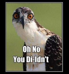 funny eagle