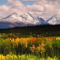 Check out the fall colors from #Denali #NationalPark. Termination dust - the first snowfall that sticks to mountain tops and signals that winter is coming - is visible on the Alaska Range in the background. While much of the country is getting its first look at fall colors, these views in #Alaska are only a memory. There, the days are getting shorter and sections of the park road are closed. The white of snow will rule the land until spring's distant arrival. Photo by Michel Hersen.