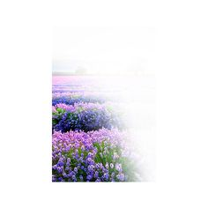 aeroceci ❤ liked on Polyvore featuring flowers, fiori, landscape, natura, tubes and scenery