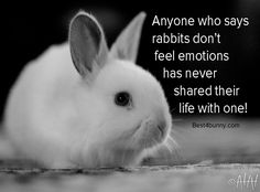 Anyone that says rabbits don't feel emotions, has never lived their life with one! www.best4bunny.com