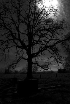 gravetree..