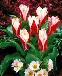 tulipanes ice cream - Buscar con Google