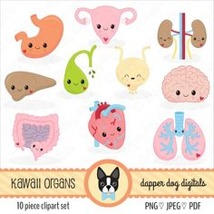 Find the desired and make your own gallery using pin. Organs clipart cute - pin to your gallery. Explore what was found for the organs clipart cute 1 Clipart, Snowman Clipart, Nurses Week Quotes, Image Digital, Medical Illustration, Vector Graphics, Easy Drawings, Art For Kids, Commercial