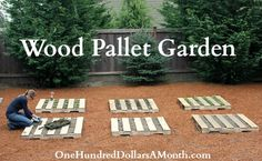 Wood Pallet Garden Update - Lettuce and Strawberries | One Hundred Dollars a Month