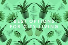 Plants & Flowers Even NYers Can't Kill via Refinery29