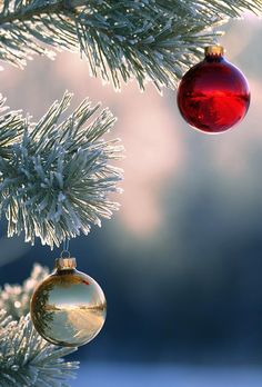 Ornaments hanging outdoors, love the reflection captured within the ornaments