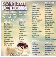 Plants to attract Bees.