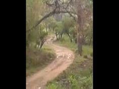 Forest Road: Rajaji National Park - Rishikesh