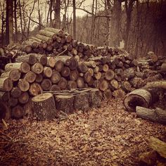 Wood pile in the North Georgia Mountains