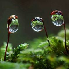 Moss Drops by Wolfgang Korazija Cool Pictures For Wallpaper, Cool Photos, Mushroom Art, Dew Drops, Water Droplets, Science And Nature, Macro Photography, Beautiful World, Mother Nature