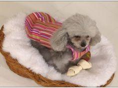 Manualidades y Artesanías   Capa para perros   Utilisima.com