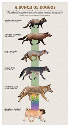 Evolution of the doggo by Julio Lacerda Prehistoric Wildlife, Prehistoric World, Prehistoric Creatures, Jurrassic Park, Memes Arte, Jurassic, Dinosaur Art, Dinosaur Crafts, Spinosaurus