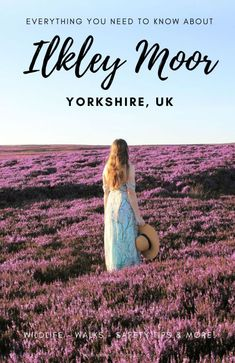 """Ilkley Moor - a magical & wild place in Yorkshire! Just a short journey from Leeds and the Yorkshire Dales lies the iconic moorland which inspired \""""On Ilkla Moor bah\'t\"""". Actually comprised on several moors, Rombalds Moor is known as Ilkley Moor. There are many things to do on Ilkley moor such as a stone circle, great Yorkshire walks, Yorkshire wildlife to spot and beautiful heather in summer! This is the ultimate guide to visiting Ilkley Moor #ilkley #leeds #yorkshire #yorkshiredales"""