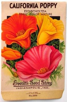 EVERITT'S SEED STORE,  California Poppy 2300, Vintage Seed Pac