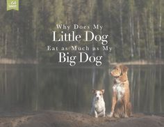 Why do some little dogs eat as much as large dogs?