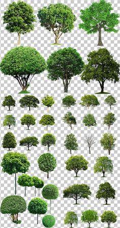 Ideas for tree plan png photoshop Architecture Graphics, Architecture Plan, Landscape Architecture, Landscape Design, Garden Design, Residential Architecture, Drawing Architecture, Interior Architecture, Perspective Architecture