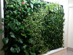 Green wall Flora, Vertical Gardens, Green Walls, Terrace, Herbs, Outdoor Structures, Balcony, Patio, Plants