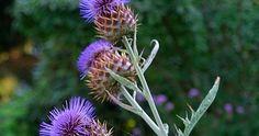 βοτανοθεραπεία, θεραπευτικά βότανα, αντιοξειδωτικά, υπερτροφές, power foods Dandelion, Flowers, Plants, Blog, Dandelions, Blogging, Plant, Taraxacum Officinale, Royal Icing Flowers