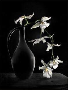 white orchid Ikebana, black vase & background