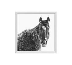"Snowy Black Horse by Jennifer Meyers, 25 x 25"", Ridged Distressed, White, No Mat"