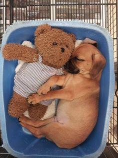 We ALL need someone to cuddle with...