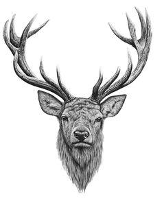 Stags Deer Head Tattoo, Stag Head, Head Tattoos, Sleeve Tattoos, Antler Tattoos, Hunting Tattoos, Stag Tattoo Design, Stag Design, Animal Sketches