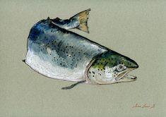 """Atlantic Salmon salar fishing river flies art color animal fish artwork decal 11x8"""" 29x21 cm art original Watercolor painting by Juan bosco..."""
