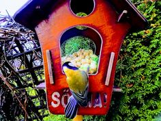 Linnud http://www.veeseire.ee/loodusblogi