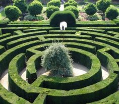Get lost in a maze maybe? #summerdayout #ukholidays