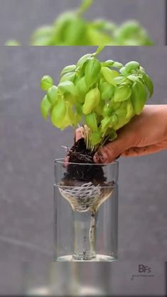 Diy Crafts Hacks, Diy Home Crafts, Container Gardening, Gardening Tips, Container Houses, Vegetable Gardening, Self Watering Plants, Diy Self Watering Planter, Self Watering Bottle