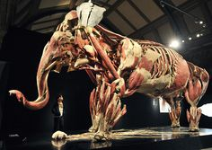 Animal Inside Out Exhibition - been to the human one and now want to see this!!!