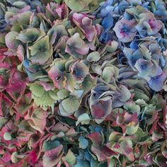 Soft shades of muted pink and blue homegrown hydrangeas can be found filling the trolleys @porters_covent_garden #autumn