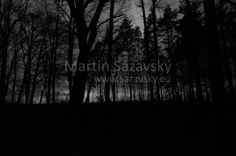 Martin Sázavský - Night Photography www.sazavsky.eu  #photography   #nightphotography   #night   #forests   #darkness   #spooky   #mysterious   #strelice   #photographer   #martinsazavsky