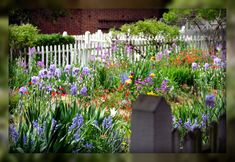 Living In Williamsburg, Virginia: Flower Garden In Colonial Williamsburg, Williamsburg, Virginia
