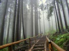fog in Tatra Mountains