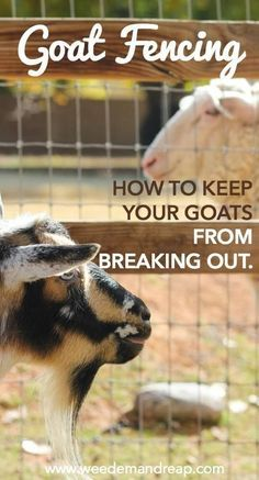 Goat Fencing: How to keep your goats from breaking out.: